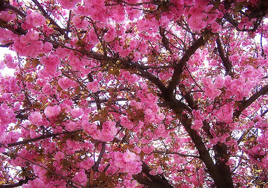 Сонник дерево, к чему снится дерево во сне видеть.